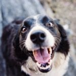 5 Ways How Happy Pets Improve Your Overall Health