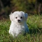 6 Tips on How to Manage Your Dog's Allergies