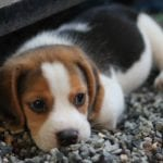 4 Tips for Taking Your Puppy Out in Public