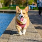 6 Ways Dogs can Improve Health and Fitness