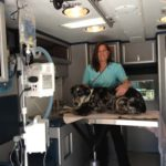 How to Find a Mobile Veterinary Service easily
