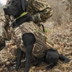How to measure your dog for a hunting vest