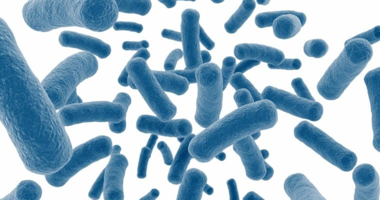 Review the Benefits of Lactobacillus Acidophilus Probiotic for Digestive System