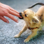 Treating a Dog Bite: 5 Important Actions to Take