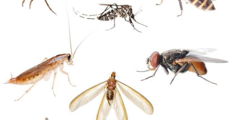 How Indoor Pests Affect Your Health