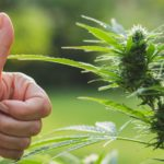Tips for buying marijuana in Seattle by considering the legalities
