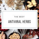 Antiviral Herbs & HPV