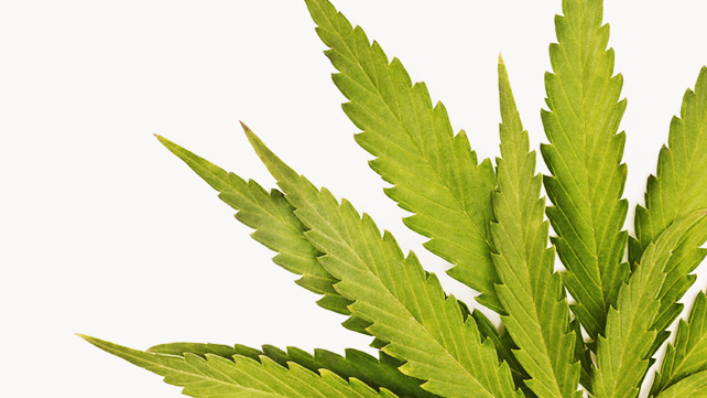 Natural and Home remedies for THC Detox