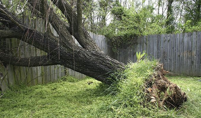 What To Do If A Tree Falls in Your Garden