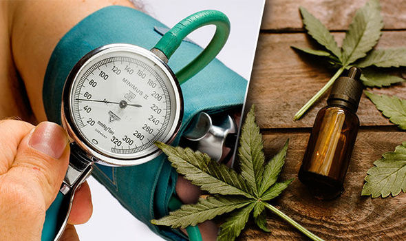 What Is the Relationship Between CBD Oil and Blood Pressure?