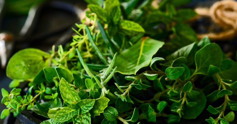 Forge Immunity with These 5 Herbs Based Concoction