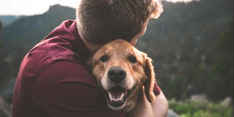 How dogs can improve our mental health?
