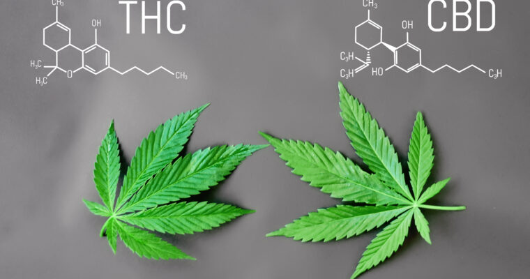 When to Take CBD: A Guide on the Key Things to Know