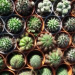 Is it good to have cactus at home?