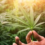 How you can find the best cannabis products that meet your needs