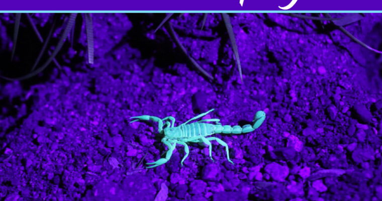 Tips to get rid from scorpions in your home