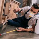Online Pest Control Treatment at Cheap Rates
