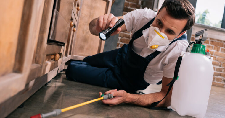 Online Pest Control Treatment at Cheap Rates