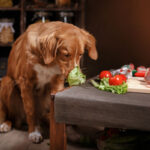 Reasons Why Celery is Good for Your Dog