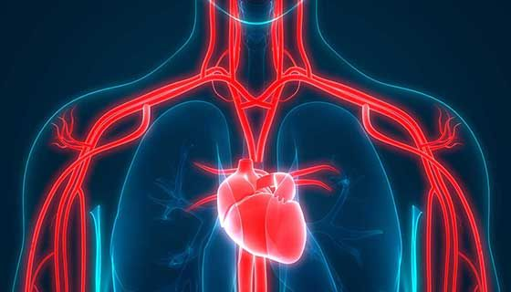 10 Ways You Can Improve Your Heart Health In 2021