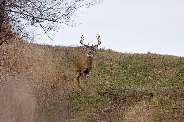 Deer Calling Tips – Seasoned Hunters Reveal Their Secrets!