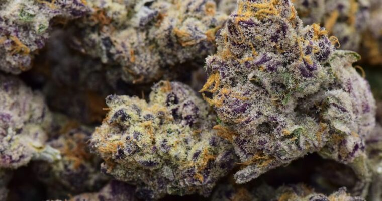 What Is The Purple Punch Strain?